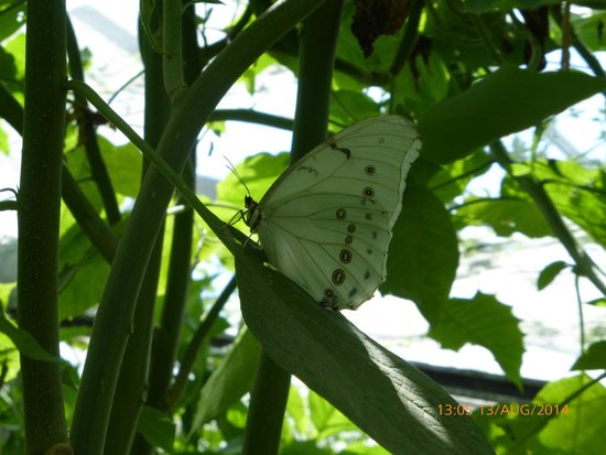 Butterfly World and Fountain World: more than a Cabbage White!