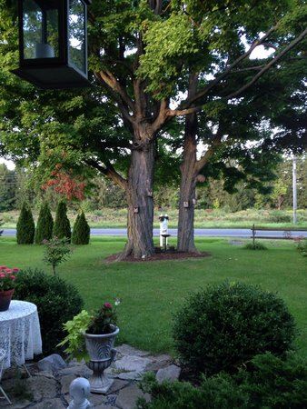 The Bella Ella Bed & Breakfast: The view off the front porch