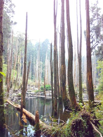 Wangyou Forest