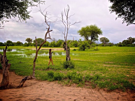 Bomani Tented Lodge: The water hole