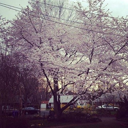 Americana Hotel: Seeing the Cherry Blossoms in full bloom in Washington, DC in the spring is a can't miss experie