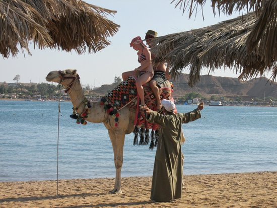 Iberotel Palace: Camel Ride on the Beach