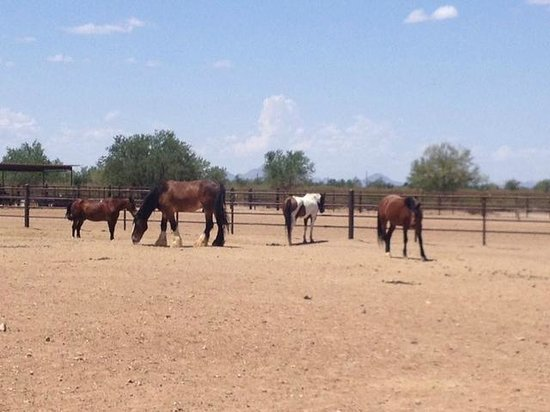 White Stallion Ranch : Cavalli
