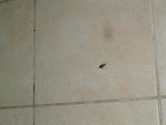 Viva Wyndham Fortuna Beach: l'amico scarafaggio è venuto a farci visita