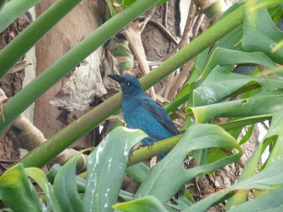 Amazon World Zoo Park: Pretty blue bird