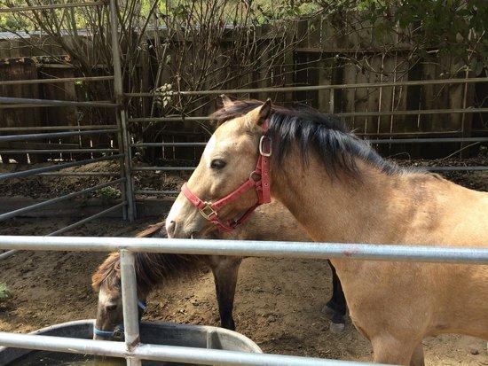 Lemos Farm : Pony