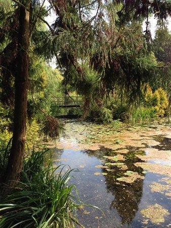 Gooderstone Water Gardens & Nature Trails : tranquility.....