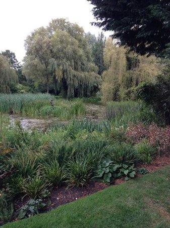 Gooderstone Water Gardens & Nature Trails : see the heron...