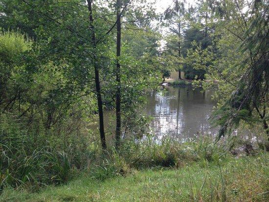 Center Parcs Longleat Forest: pond