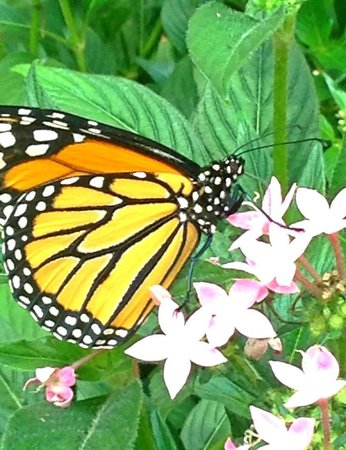 The Original Mackinac Island Butterfly House & Insect World: Up close & personal