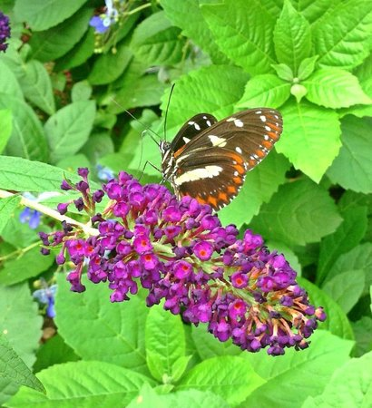 Mackinac Island Butterfly House Tickets