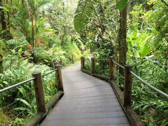 Hawaii Tropical Botanical Garden: Ramp down into the garden