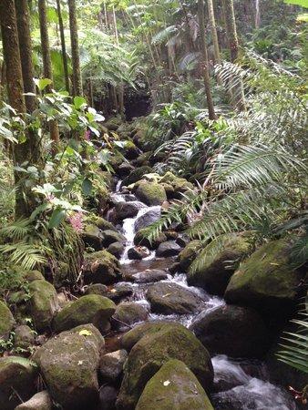 Hawaii Tropical Botanical Garden: water features