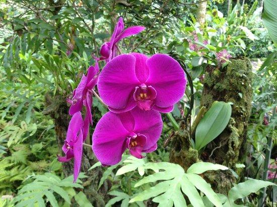 Hawaii Tropical Botanical Garden: lovely Orchids