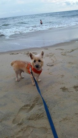Wyndham Virginia Beach Oceanfront : our dog on the beach