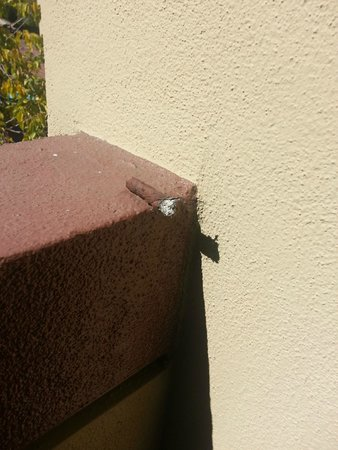 Best Western Plus Wine Country Inn & Suites: blunt left on the balcony by previous guest
