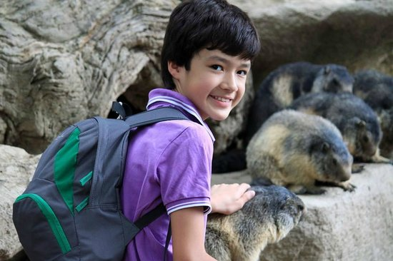 Hotel Les Templiers : Zoo