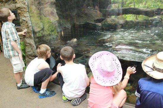 Dallas World Aquarium: Kids enjoying shark feeding