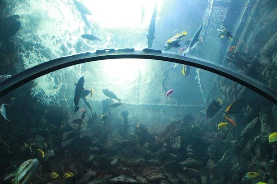 In The Under Water Tube Picture Of Dallas World Aquarium