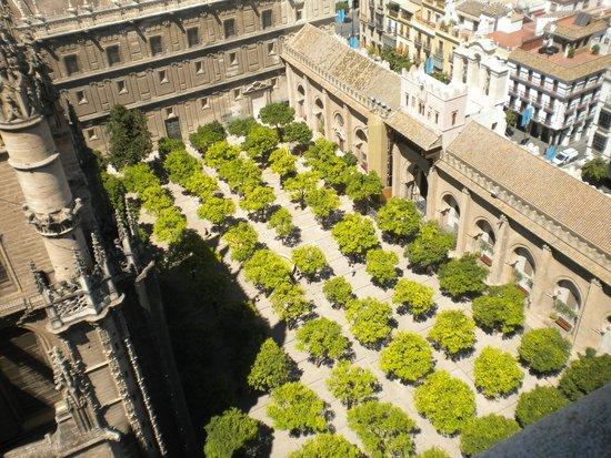 Catedral de Sevilla: Jardín de los naranjos