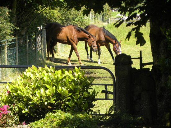 Toberdornan House: Horse livery grazing