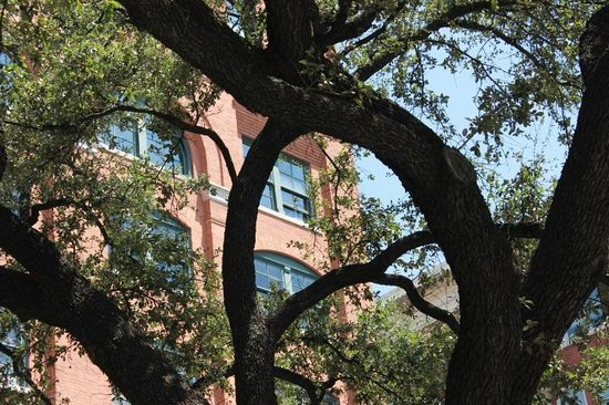 Dealey Plaza National Historic Landmark District: Window on 6th floor of Book Depository where Oswald committed his crime