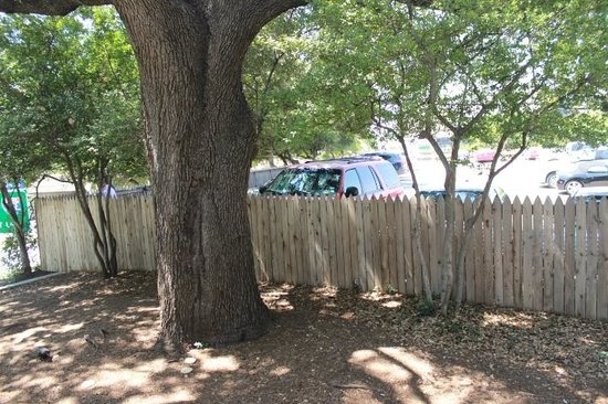 Dealey Plaza National Historic Landmark District: Fence a top the knoll