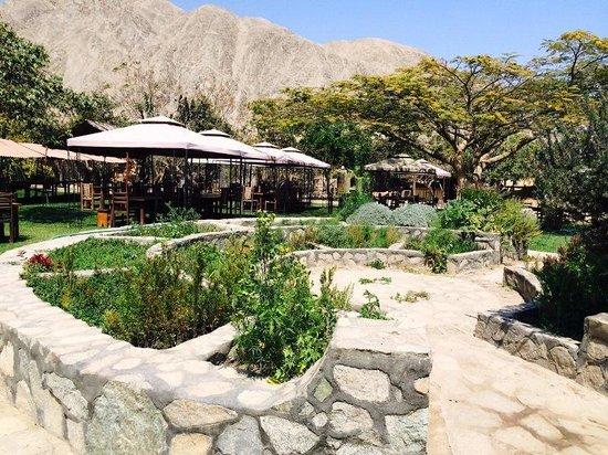 Refugio de Santiago Ecolodge: Jardín de Hierbas Sagradas