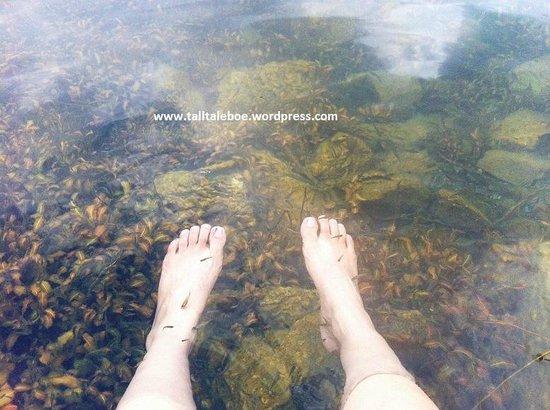 Lake Holon: Fish Foot Spa for Free!
