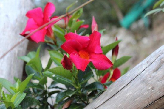 Casarufolo Paradise : Aiuole di fiori circondano Casarufolo