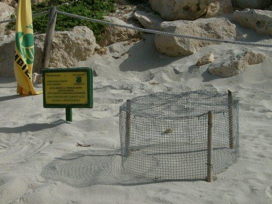 Plage des lapins : recinto delle uova delle tartarughe