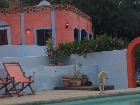 El Jardin Hotel: My new friend