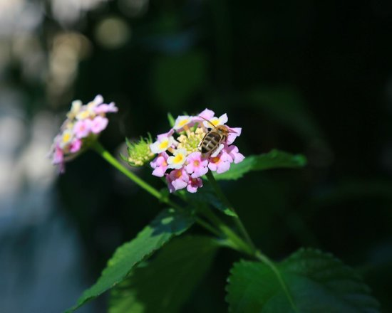 Nostos Hotel: Hotel grounds - blackberry and bee