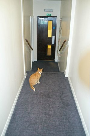 Claymore Hotel: Cats roaming the hotel