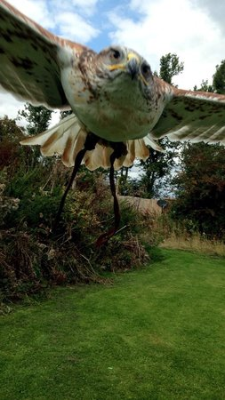 York Bird of Prey Centre: Close encounter