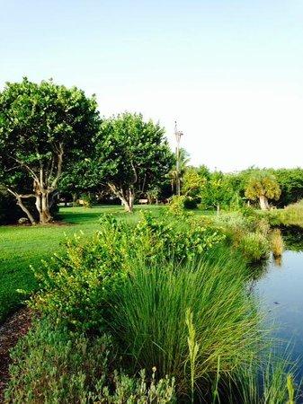 Ocean's Reach Condominiums: Green space at Ocean's Reach.