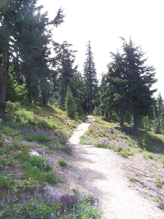 Hood River, Oregón: Timberline Trail/Pacific Rim Trail