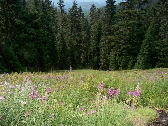 Hood River, Oregón: Meadow view from Timberline Trail