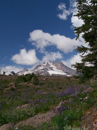 Hood River, Oregón: Mount Hood view from Timberline Trail