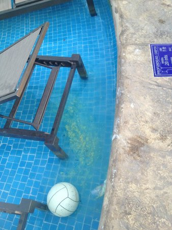 Moon Palace Cancun: Garbage in the Pool