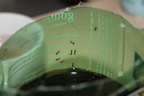 Apartamentos Pierre & Vacances Nice Palmiers: invasion de fourmis