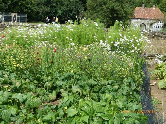The Garlic Farm: Wild flower field
