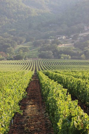 Napa Valley Local Wine Tours