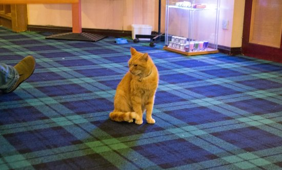 Claymore Hotel: Cat and food bowl in reception