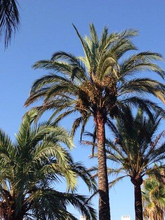 Puerto Azul Suite Hotel: Aug 2014