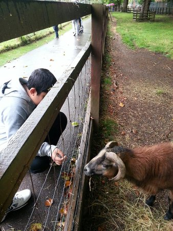 Birmingham Wildlife Conservation Park: Lovely friendly animals.
