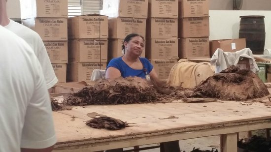 La Aurora Cigar Factory: this lady was sorting through the wrapping leaves