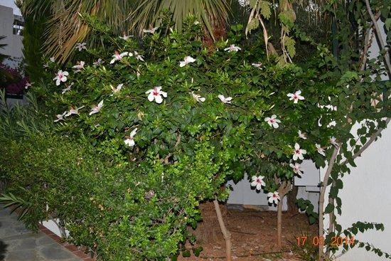 Anna Maria Village: красивые цветы