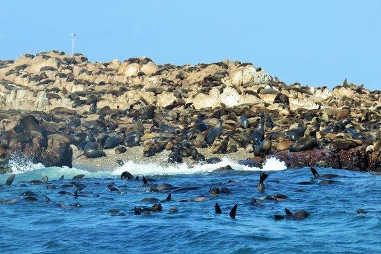 Dyer Island Cruises: dyer island