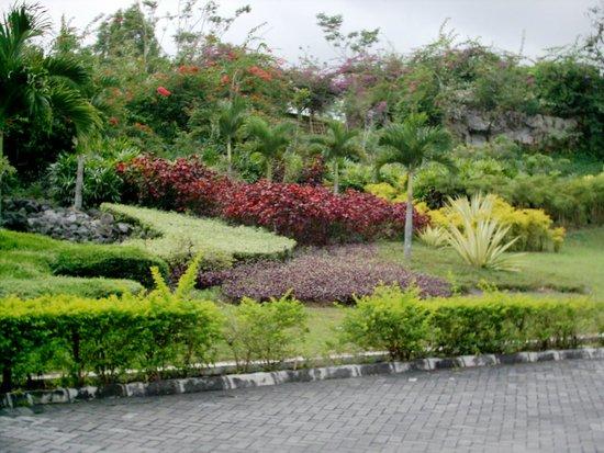 Hyatt Regency Yogyakarta: Some area foliage